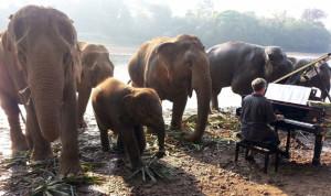elefantes piano