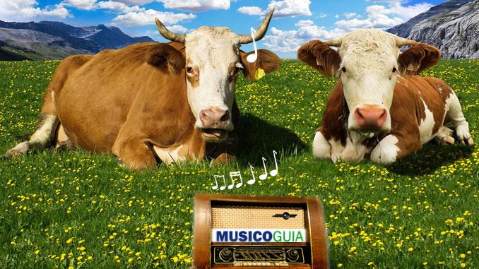 vacas-musica